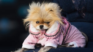 Lisa Vanderpump's Dog Giggy Dies