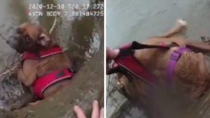 Body Cam Shows Cops Rescuing Lost Dog from Frigid Creek