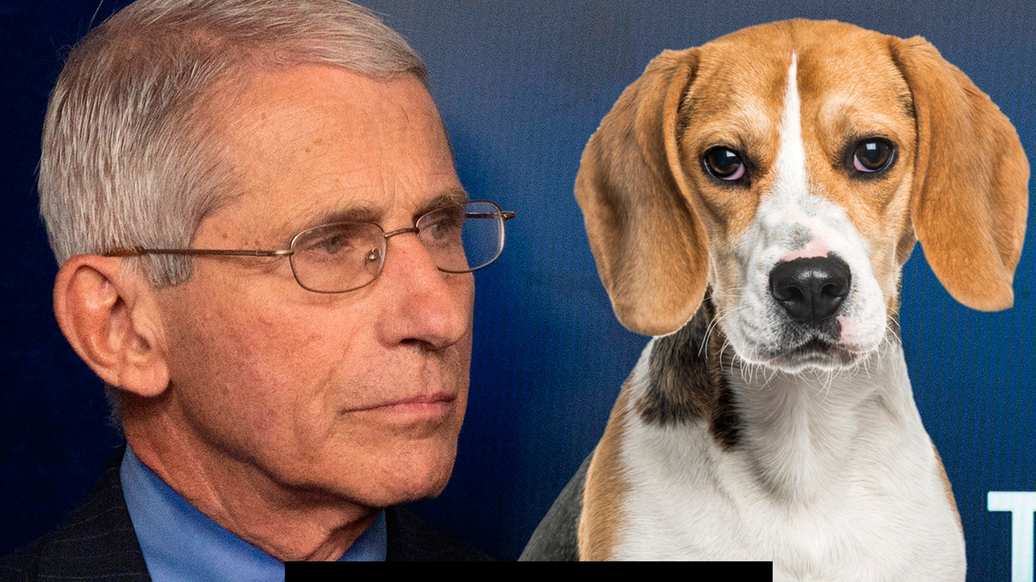 Beagle Org Demands Dr. Fauci Stop Supporting Animal Testing