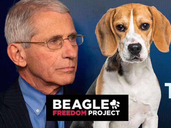 Beagle Org Demands Dr. Fauci Stop Supporting Animal Testing.jpg