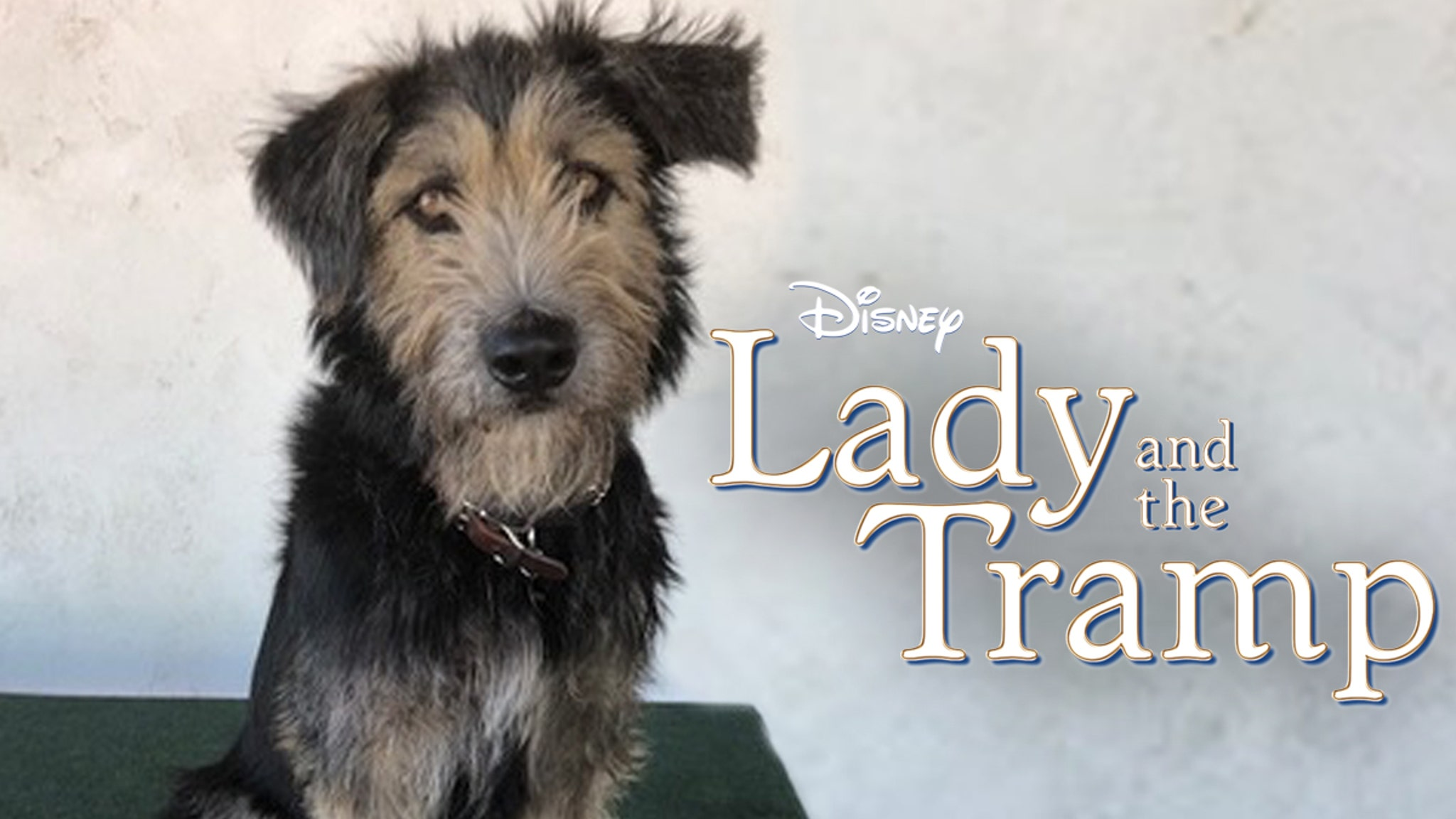 Disney's New 'Tramp' Went from Kill Shelter to Movie Star