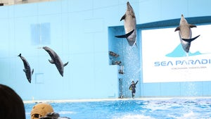 Dolphins Still Putting on Show in Japan without Spectators