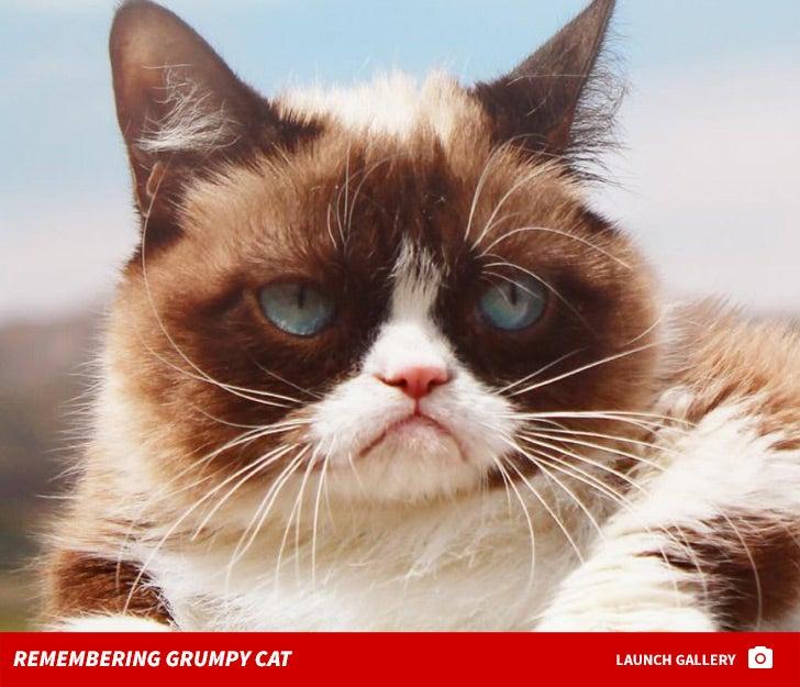Grumpy Cat Pictures