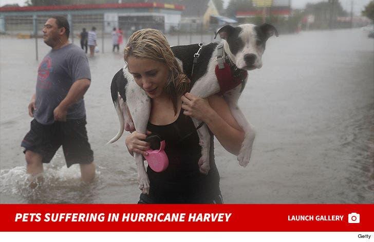 Pets Suffering In Hurricane Harvey