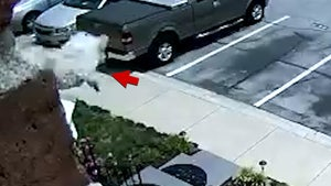 Dog Jumps Out Of Window On Video, Walks Off Unscathed