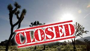 Joshua Tree National Park Closes After COVID-19 Triggers Mass Visits