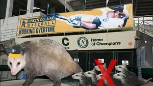 Oakland A's -- Rally Possum Can Stay As Long As It Stays Celibate