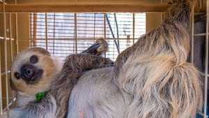 Phoenix Zoo Sloth is All the Rage on Cameo, Pulling $50 Per Shout-Out