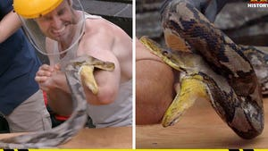 'Kings of Pain' Star Adam Thorn Lets Python Bite, Bloody His Arm