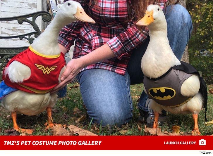 TMZ's Pet Costume Photo Gallery