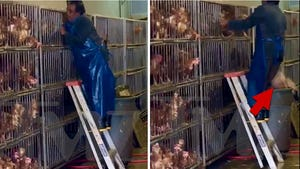 New Shocking Video of NYC Wet Markets as Animal Rights Org Demands Shutdown