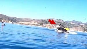 Whale Damn Near Swallows Kayakers in California's Avila Beach