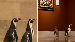 Penguins Wander Empty Art Museum During Field Trip from Zoo