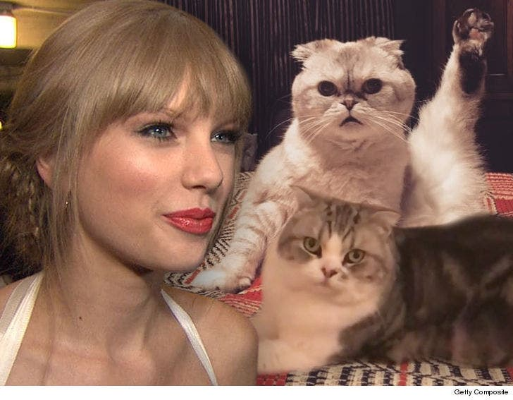 Taylor Swift Is Making Big Money Off Her Cats And Also Cats
