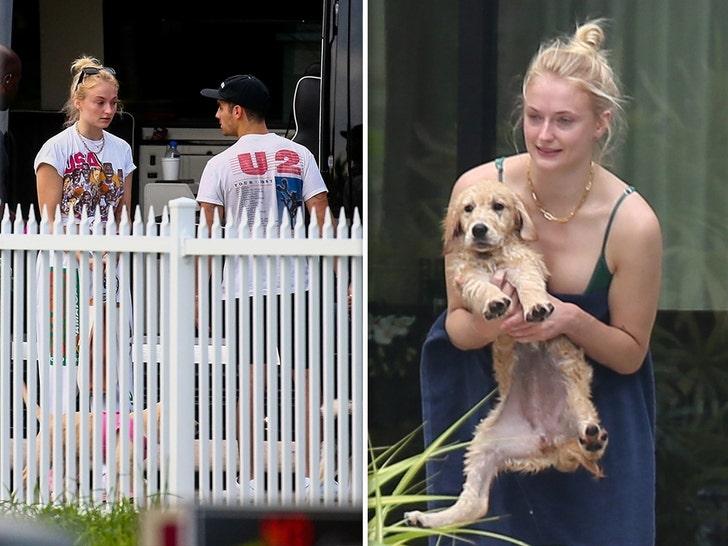 Joe Jonas and Sophie Turner's New Dog