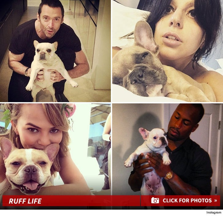 Frenchie Friday -- Famous Pooch-Loving Faces