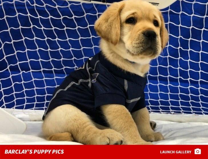 Barclay Puppy Pics