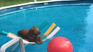 Good Dog Quietly Floats in Pool on Noodles, Serene 4th of July