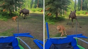 Moose Goes Toe-to-Toe with Chill Dog in Alaska Encounter