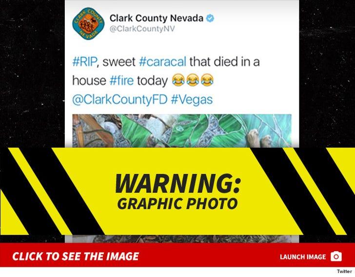 Mally Mall - Clark County Nevada - Dead Cat