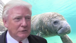 Feds Investigating Manatee with 'TRUMP' Scraped Onto Its Back