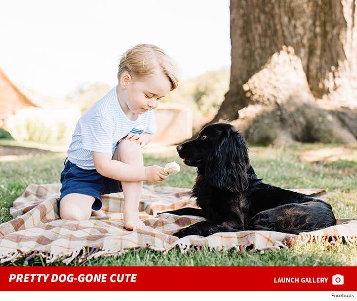 Prince George -- Dog-gone Adorable