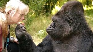 Koko the Gorilla Dead at 46