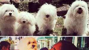 Ray J's Ex -- Our Other Dogs Cry Daily ... Please Give Boogati Back