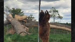 Bear Pole Dances In Hilarious Video
