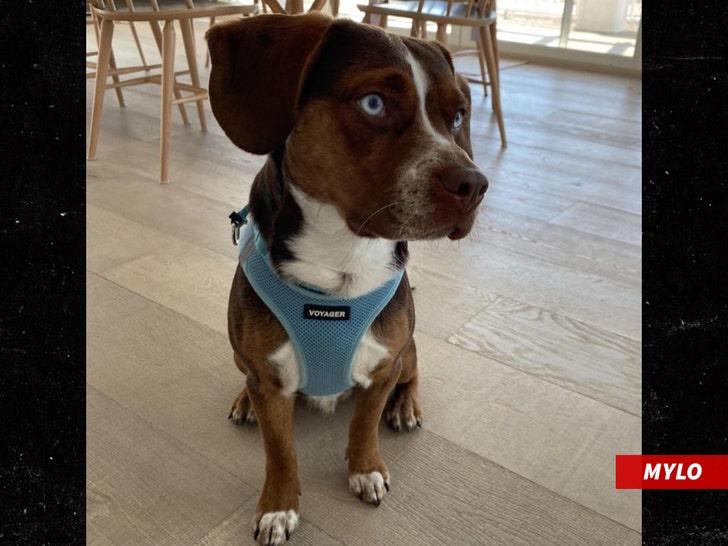 Alexandra Raisman's dog Mylo