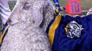 Retired Naval Academy Goat Mascot, Bill 33, Dead At 14