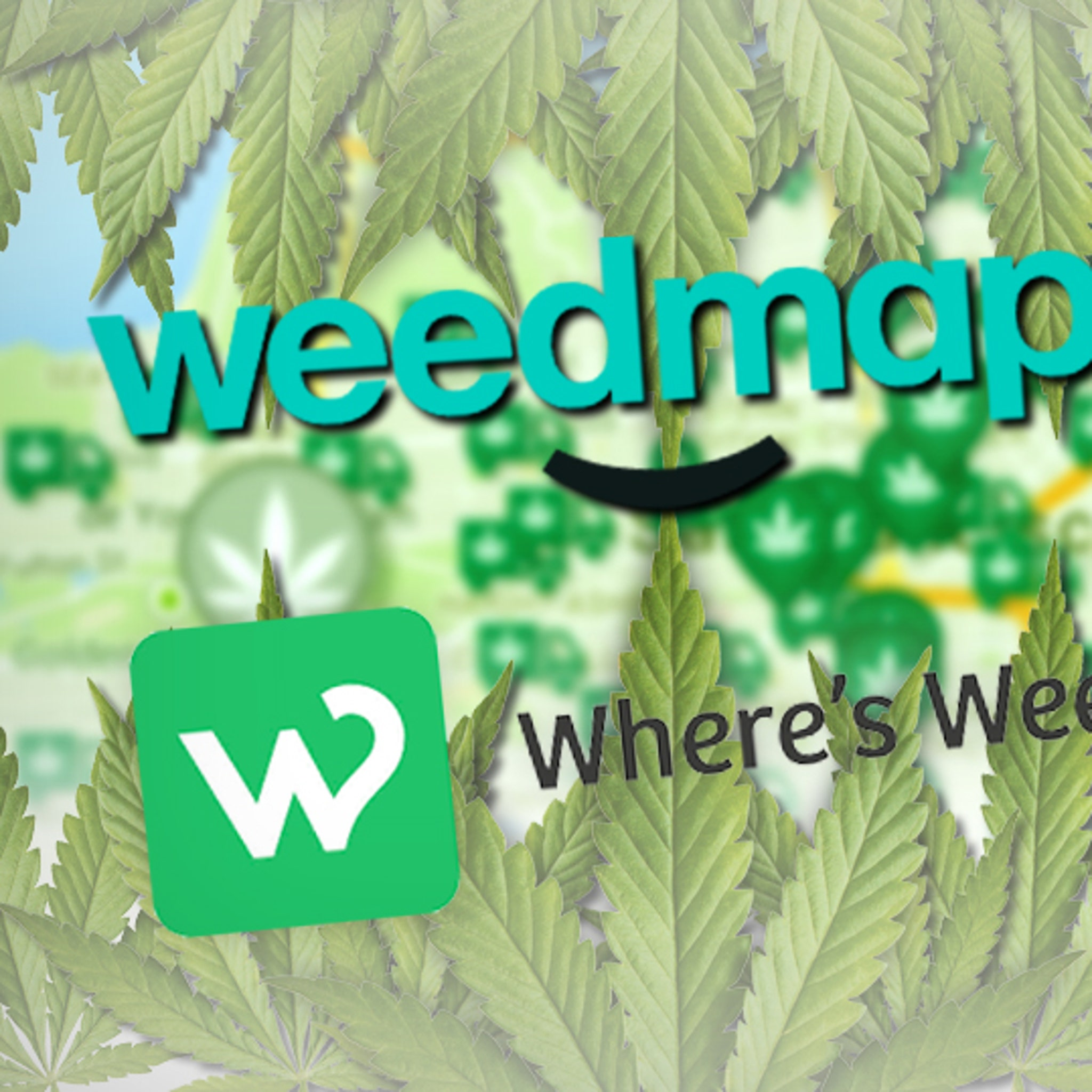 Weedmaps Wages War on Other Pot Co      You're Just a Clone, Dude