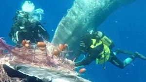 Sperm Whale Caught in Fishing Net Freed by Divers, Up-Close POV