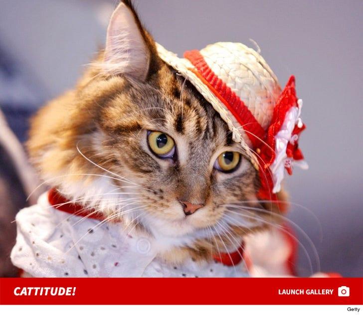 Kiev's Costumed Cats