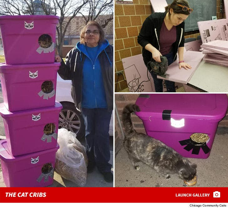 Chicago Cat Community -- Creating Shelters For Cold Conditions