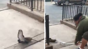 NYC Street Fight Between Rat and Pigeon Broken Up by Man with Pipe