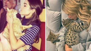 Celebrities With Cats -- Picture Purrfect!
