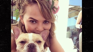 Chrissy Teigen's French Bulldog Pippa Dead at 10
