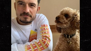 Orlando Bloom Destroyed Over Lost Dog