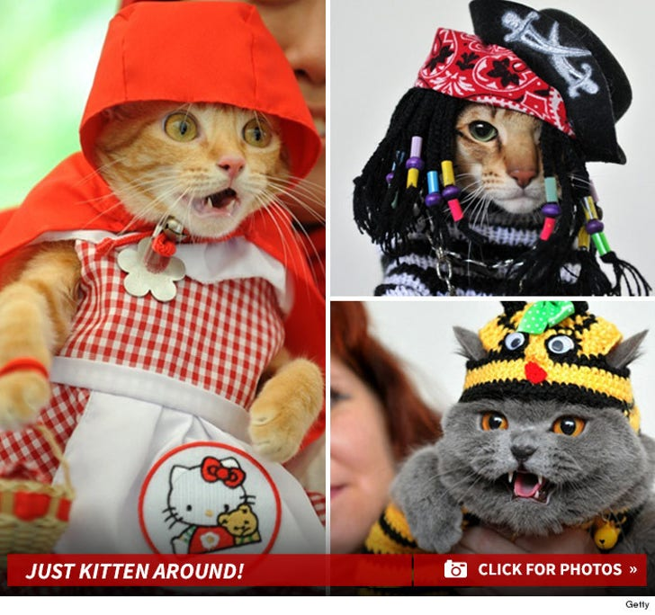 Off the Catwalk! -- Cats In Hats