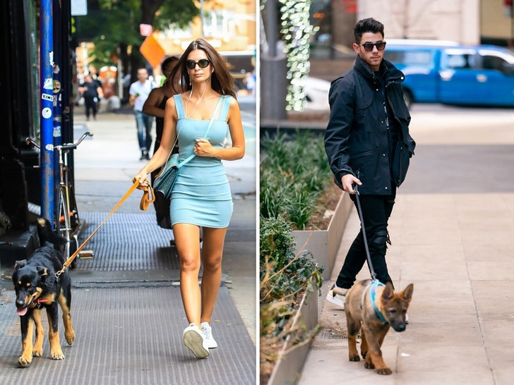 Stars Walking Their Dogs
