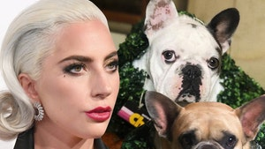 Lady Gaga Dognappers May Have Picked Singer as Ransom Target