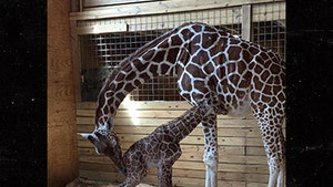April the Giraffe Seeking New Sponsors for Baby Naming and Live Stream
