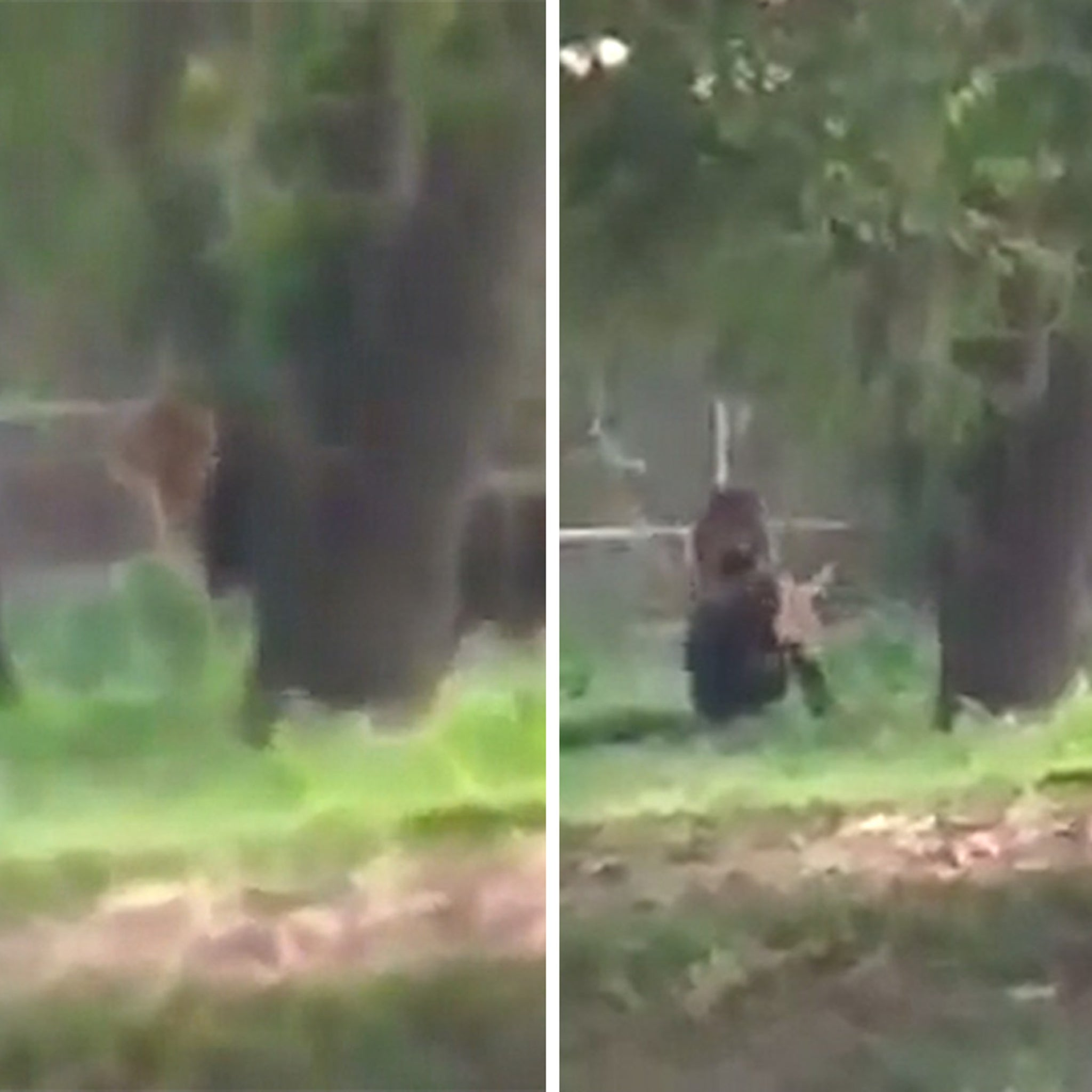 Man Jumps in Lion Enclosure, Stares it Down and Somehow Survives