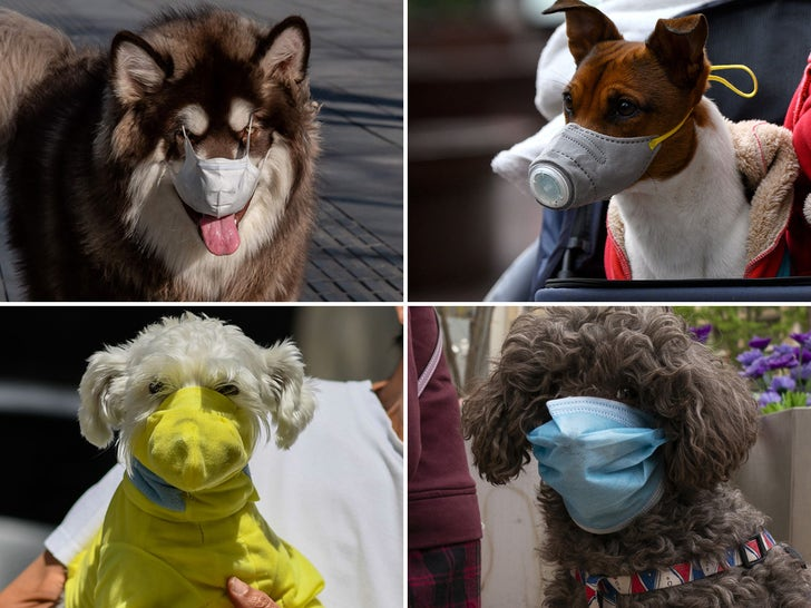 Dogs Wearing Masks for Coronavirus Protection