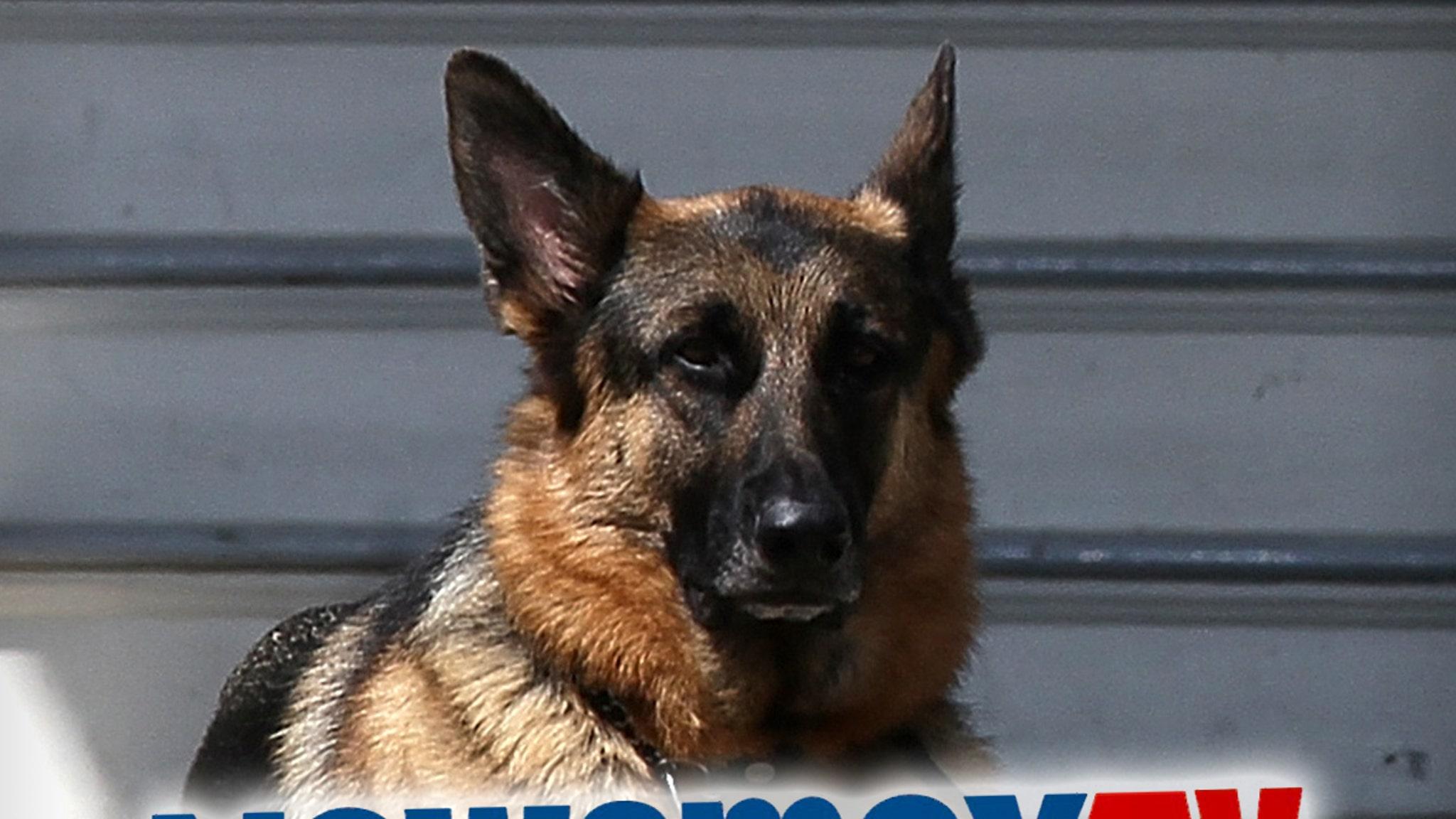 Собака президента Байдена, чемпион, высмеянный и названный уродливым на Newsmax
