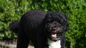 The Obamas' Dog, Bo, Dies at 12 After Cancer Battle