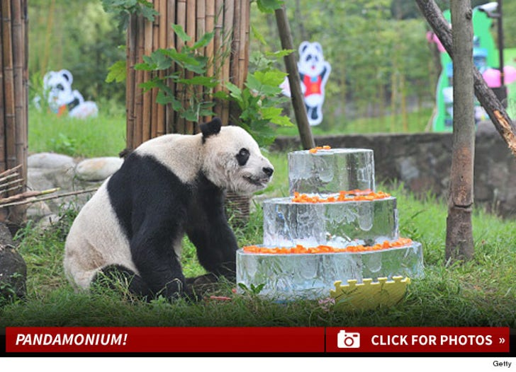 Pan Pan the Giant Panda Celebrates 30th Birthday with Frozen Cake