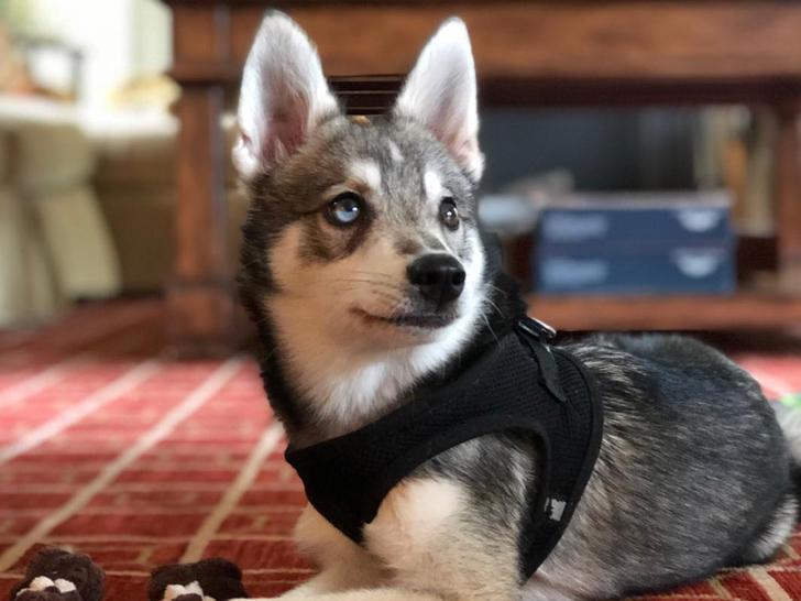 Nike The Dog -- Cute Canine