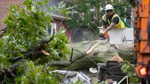 Man Crushed to Death As Tropical Storm Isaias Topples Trees in NY and NJ
